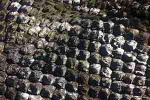 ピラルクー魚革
